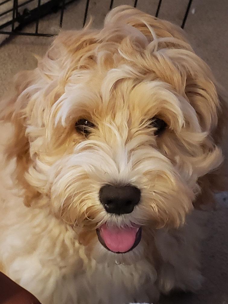 Barley a puppy